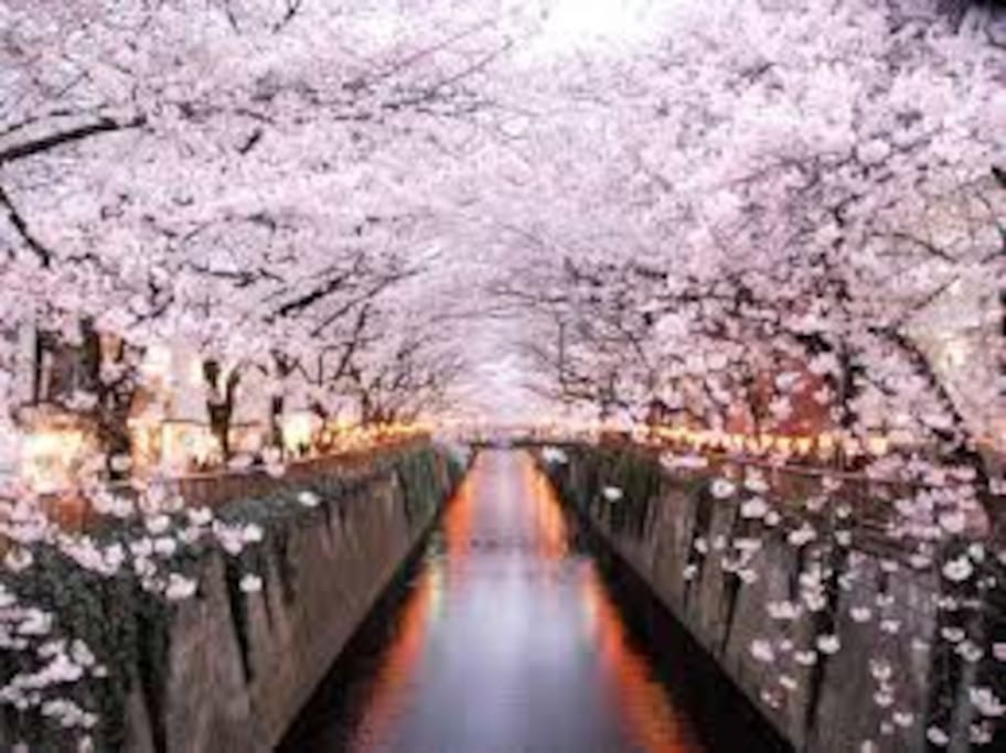 Famous place of a famous cherry tree.