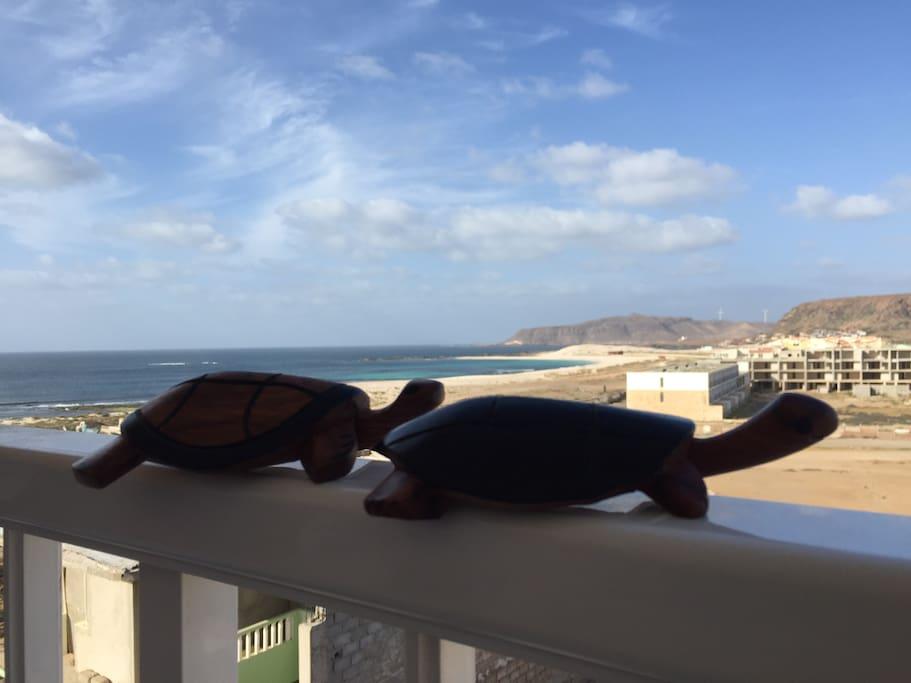 La saison des tortues va de juin à juillet. Visite organisée sur les plages sous haute surveillance et protection