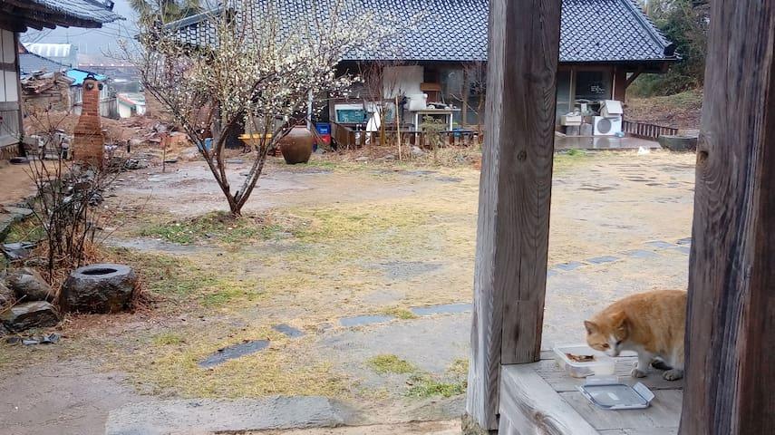 Old Forest - Jangheung-eup, Jangheung - Andre