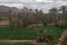 Charming Inn in the Palm Grove in Adgz