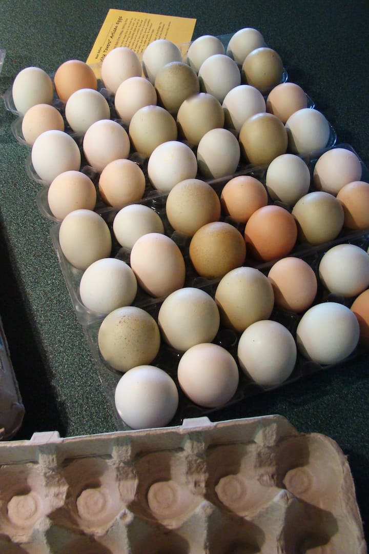 Sorting eggs to put in cartons