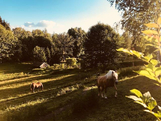 Malerisches Landhaus Fuchs mit Alpenblick!