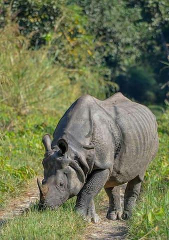 Sauraha Homestay(Nepal)