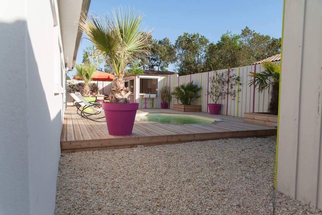 Grande terrasse avec palmiers, jasmins et Olivier.