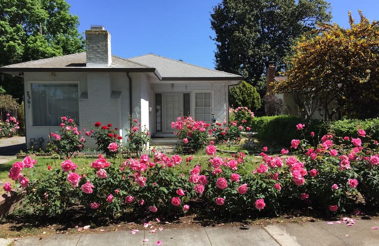 The house of roses in the heart of Silicon Valley