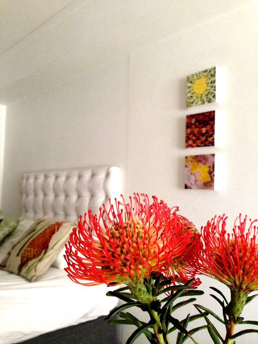 Proteas - beautiful and indigenous