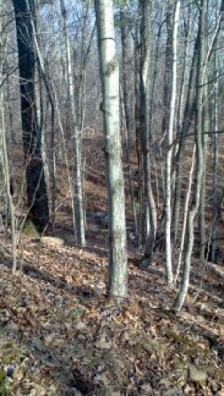Entire 5-acre Campsite Near Hunter Mtn trails