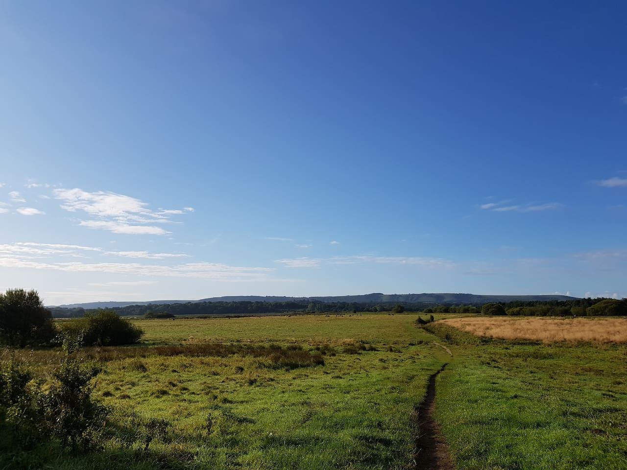 Pulborough wildlife santuary...  2 minutes walk away