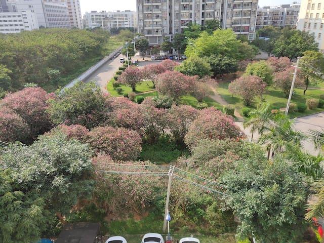 小区花林环绕,粉色的花开满超浪漫
