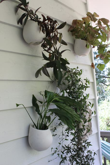 Front deck hanging plants