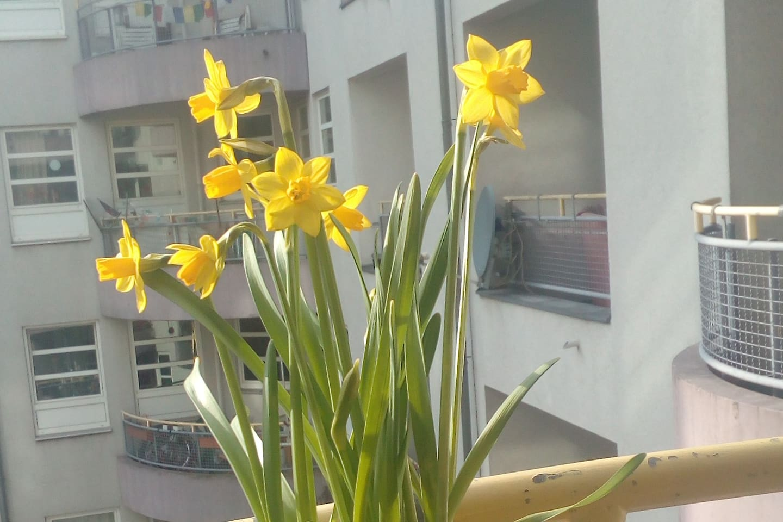 Der Balkon mit vielen Pflanzen