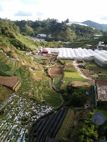 Leisurely Zone - Cameron Highlands - Pis