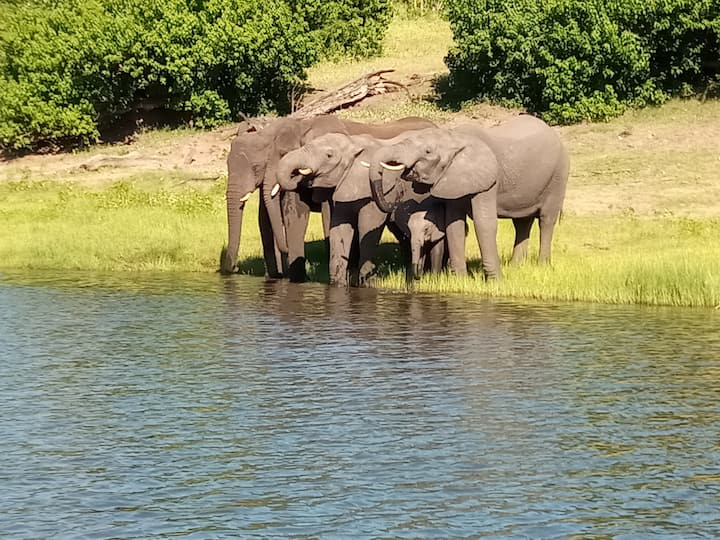 The best of Botswana on 7 to 10 day Camping Safari