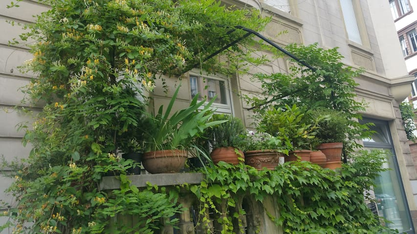 Garden view in the heart of the Neustadt