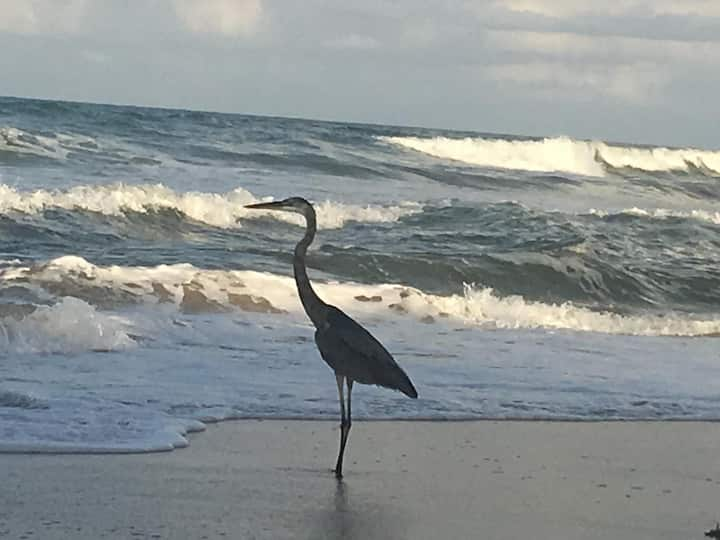 Wildlife, Waves, and Wonder on Melbourne Beach - Direct Oceanfront