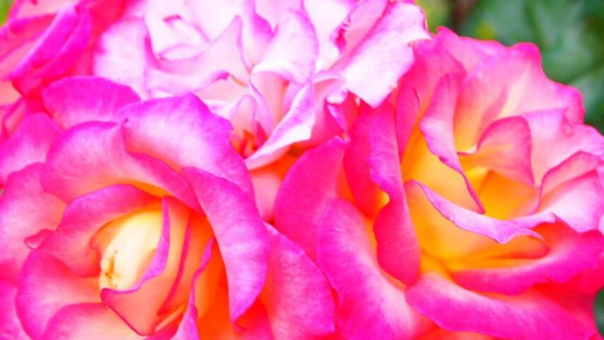 Rose Garden, Private Bedroom, Shared Home - Arlington - Ev