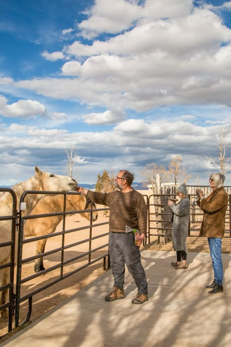 Seeing Light, horses and Santa Fe skies