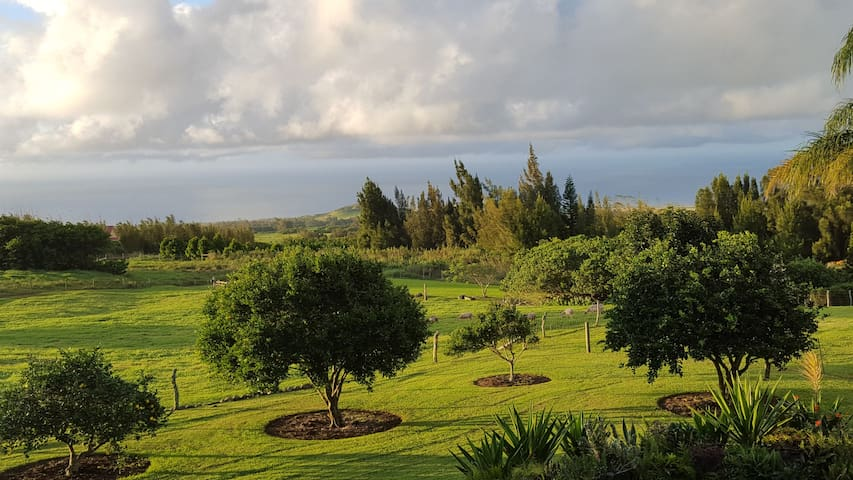 Aloha Cottage Upcountry Epic Views in Kohala - Hawi - Cabin