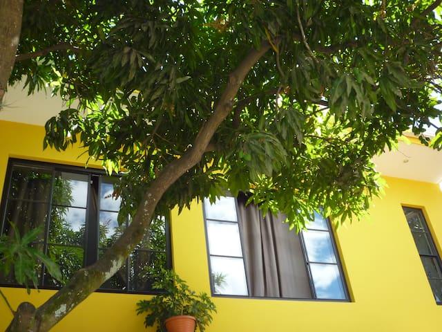 el palo de mango y su agradable frescura en el patio central.
