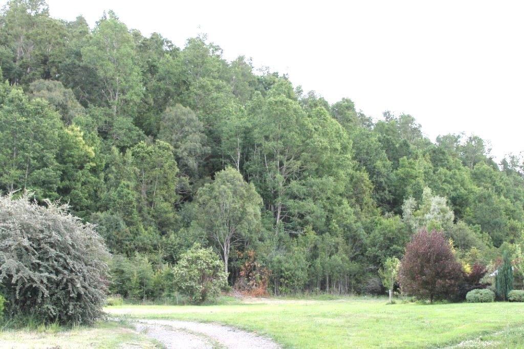 Prados y bosque nativo.