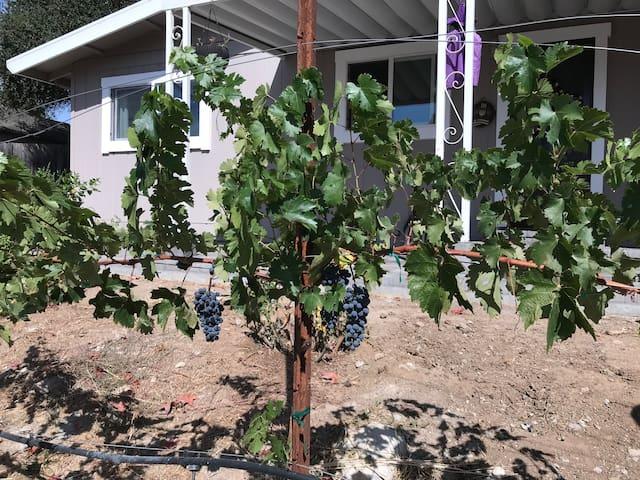 "Modern "" Vineyards Found"" Wine Country Home"