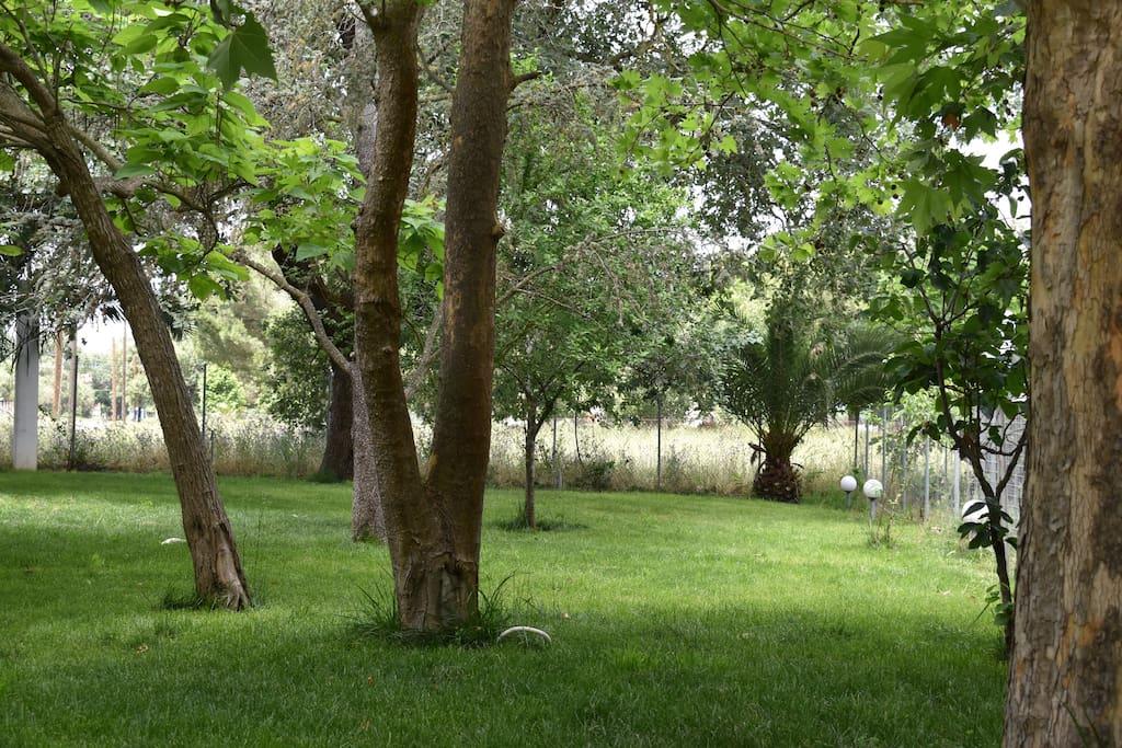 Κήπος - Garden