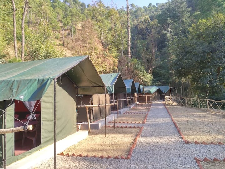 Jungle Stays | Camp| Group Offer | B'fast & Dinner