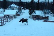 Wildlife visit us often