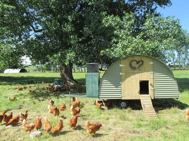 Even our Chooks have 5 star accommodation.