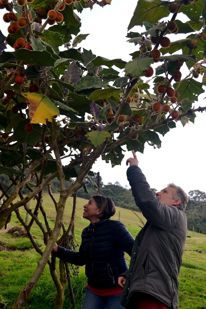 Conociendo Frutas Exóticas y Típicas