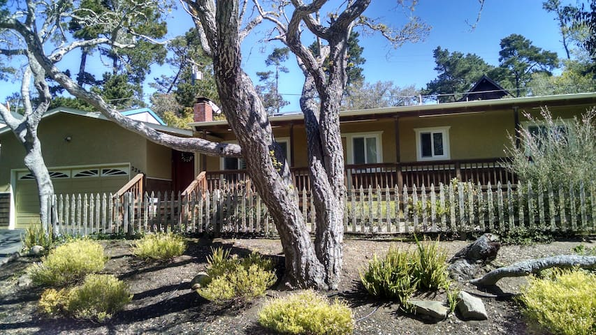 May 2017 20% off! Squirrel's Cottage- Single-level - Cambria - House