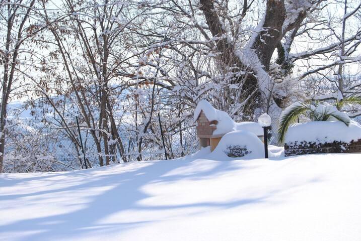 Altra GRANDE QUERCIA sotto la neve
