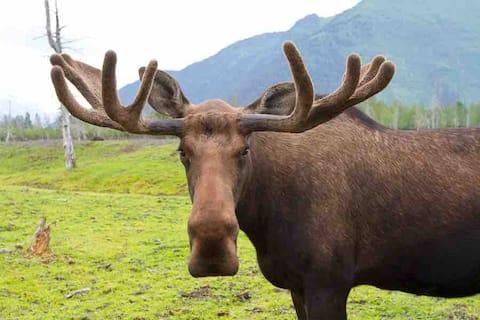 Gateway to Rocky Mountain National Park