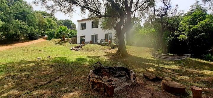 Casa de Olivos 2