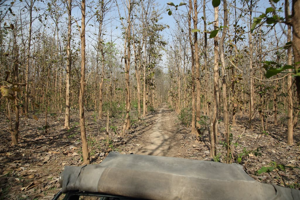 A jungle trip to jim corbett