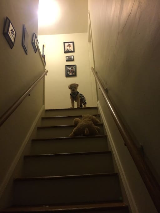 Must love dogs: Stairs