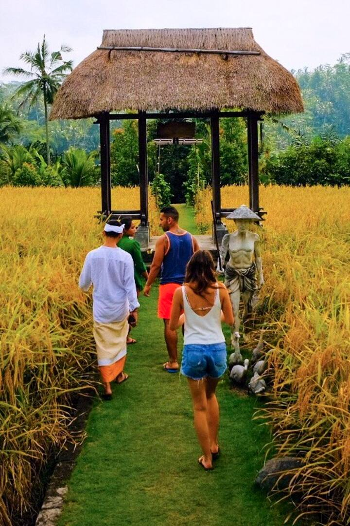 Explaining how the rice is cultivated