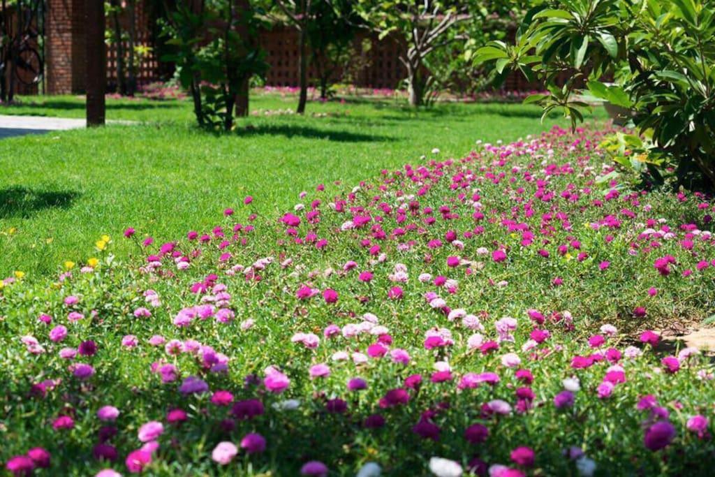 Flower in Gardern - Hoi An Residence Villa