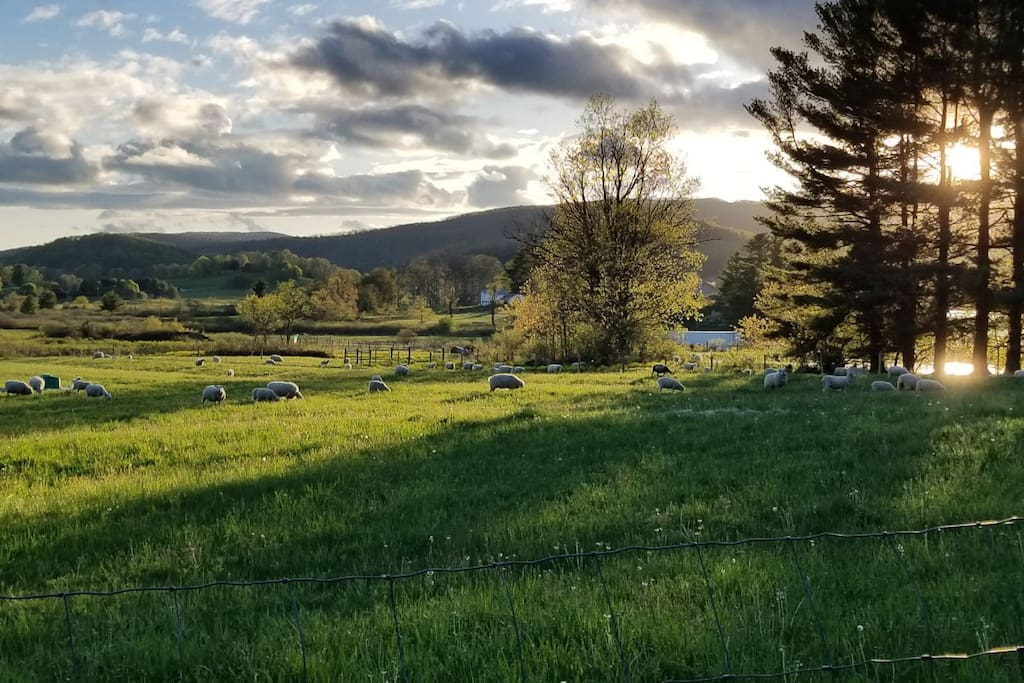 Our neighbors field just across the road from the cottage. Caught the light just right!