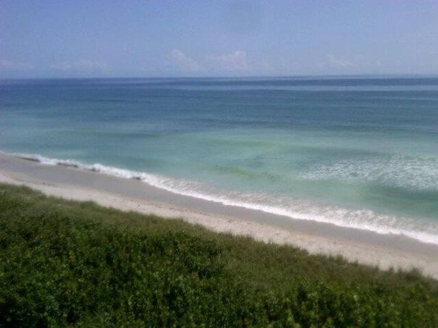 Sand Dollar by the Ocean