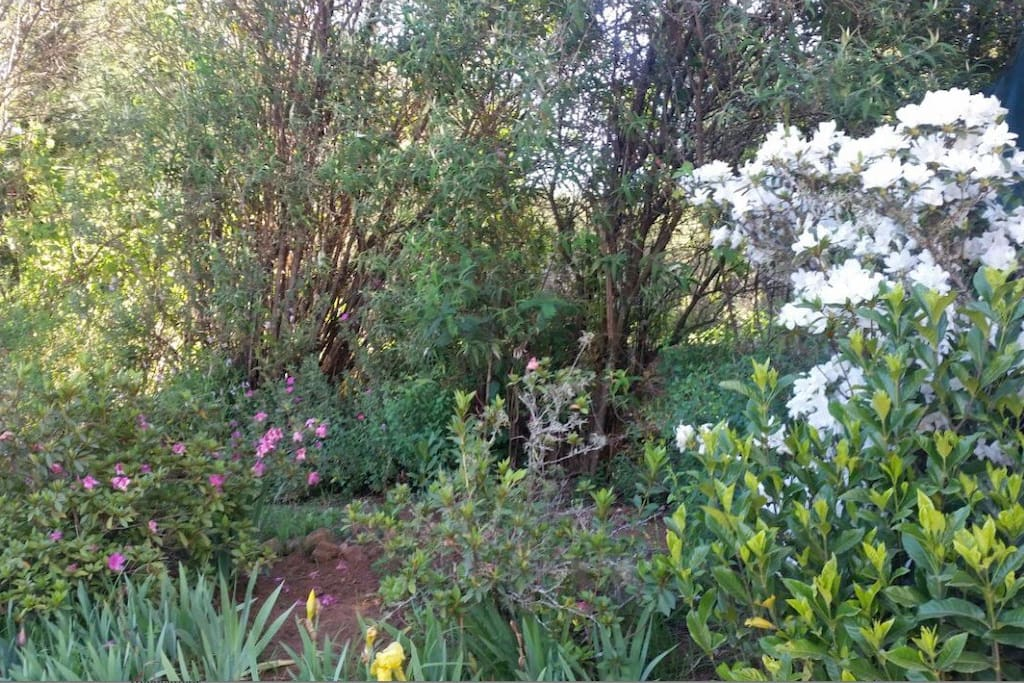 Tranquil Gardens with amazing Bird Life