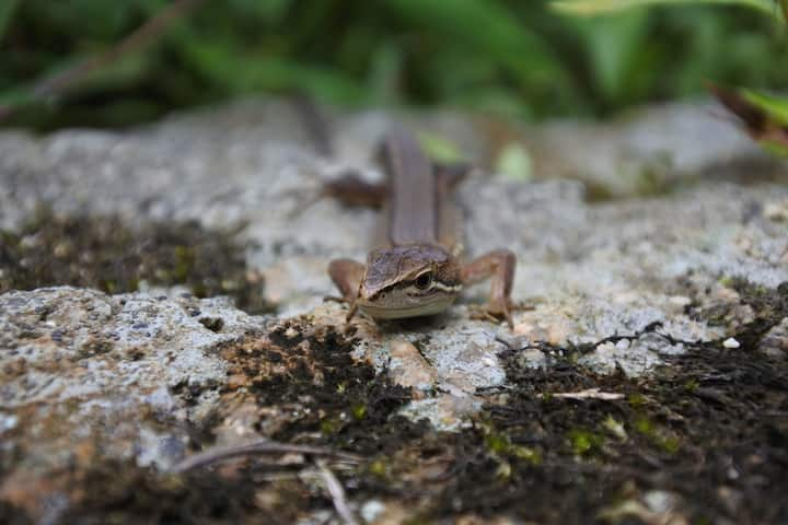 A small and cute lizard