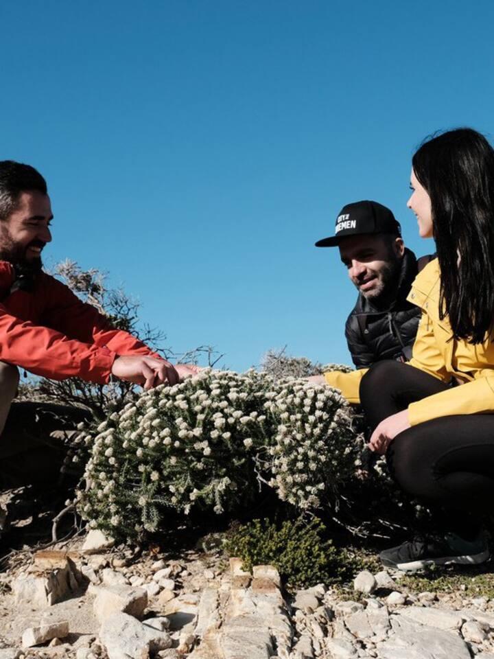 Understanding the beauty of Fynbos