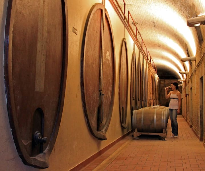 The ancient part of the cellar