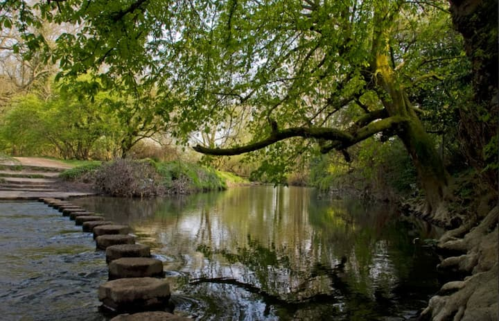 Stepping Stones through River Mole