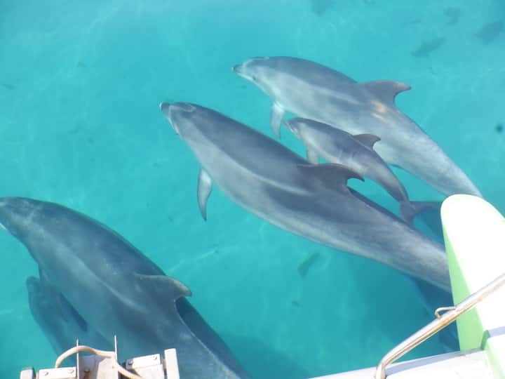 Dolphin family playing under the bows