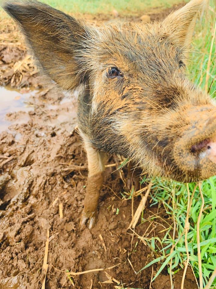 Meet our farm animals