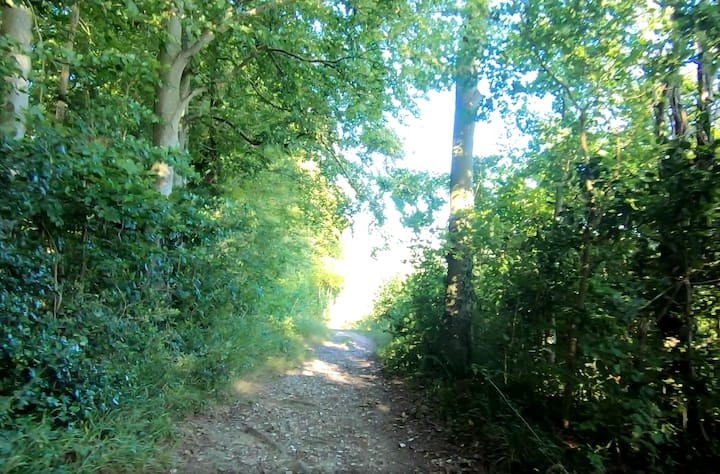 Up Marden track