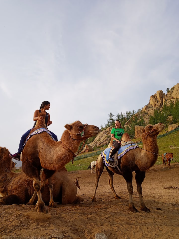 Ride a camel. opt.