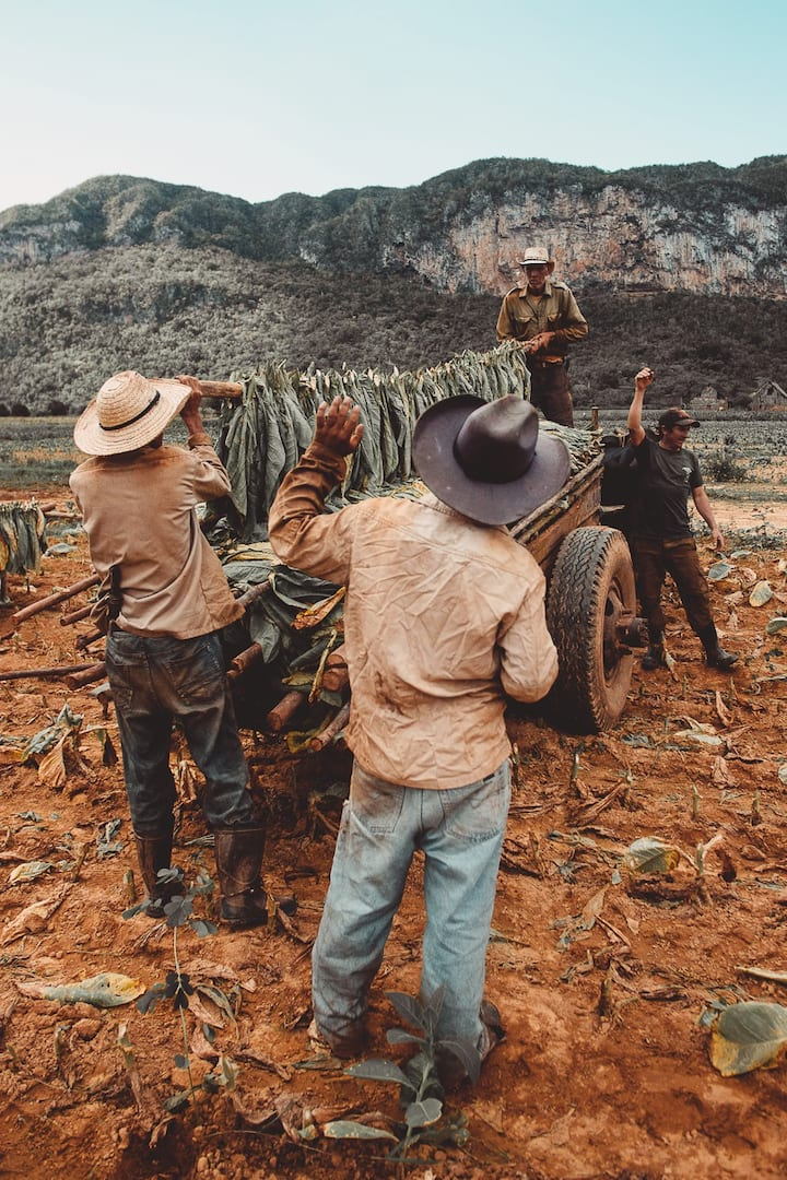 Spend time with the tobacco farmers